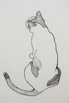 Ink line drawing of a pet cat. So cute! I'll always be a cat lady. Sketches like these always make me happy and warm on the inside. Simple, easy lines that suggest just enough are always good drawing ideas! #drawing #sketching #sketchingpets #drawingcats #drawinganimals #pets #cats #linedrawing #drawing_easy #giftidea #petportrait #artidea #drawingidea