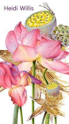 Heidi Willis z my favorite artist :) New artist to me...cn