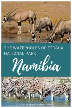 Etosha National Park in Namibia offers amazing wildlife viewing opportunities, especially at the waterholes due to the extremely dry climate. via @Laurel_Robbins/