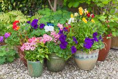 Incredible database listing and describing 200 container plants and flowers. Narrow your search for sun amount, water amount, pH, hardiness zone and more. The ultimate container plant directory.