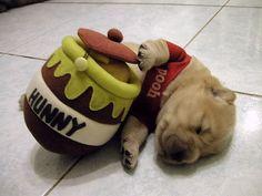 Winnie the Pooh Dog Costume