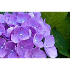 small purple flowers.jpg ❤ liked on Polyvore featuring backgrounds and photos