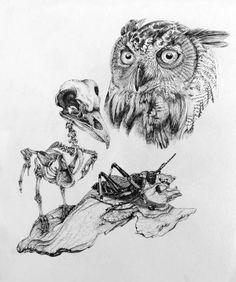 Owl Study by David Silberbauer, via Behance