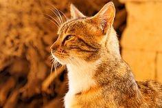 Kissa, Kreeta, Luostari