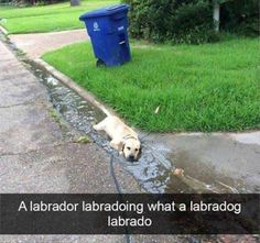 23 Funny Animal Pictures #Funny #Picture
