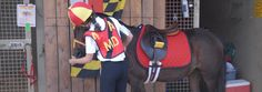 US Pony Clubs