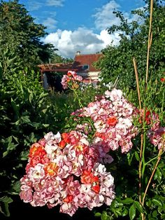 "Rosier ""Éclats d' Ambre"" MelaRosa France. Ambre, Floral Wreath, France, Wreaths, Home Decor, Rose Trees, Homemade Home Decor, Flower Crowns, Door Wreaths"