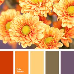 Color Palette #2935