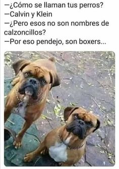 New Memes, Dankest Memes, Funny Memes, Hilarious, Death Note Funny, Mexican Humor, Humor Mexicano, Funny Internet Memes, Spanish Memes