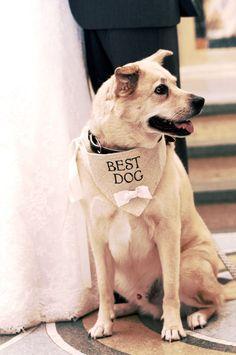 Ivory Best Dog Boy Bowtie Dog Collar Bandana Rustic Burlap Wedding Photo Prop…