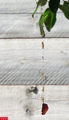 25-07 | Ik heb heel creatieve spinnen in mijn tuin!