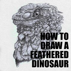 How to draw a feathered dinosaur step by step. 4dogarts.com