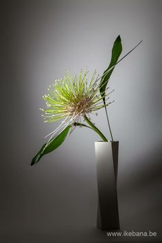 Ikebana by Ilse Beunen. If you want to know more about this flower and arrangement register for our newsletter at www.be/newsletter