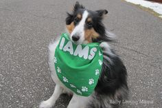How Our Family Pet Completes Our Family + IAMS $250 in VISA Gift Cards {Giveaway}