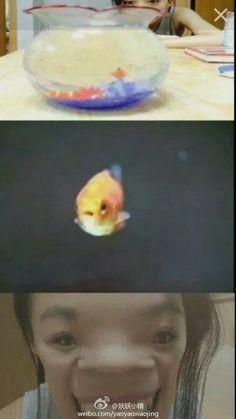 金魚眼中的我們