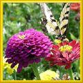 basic gardening tips for beginners - my gardening blog here  http://gardening-blog.org