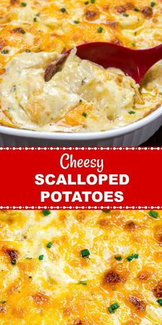Easy Cheesy Scalloped Potatoes are very similar to Potatoes Au Gratin because they are drenched in a creamy, cheesy, garlicky cream sauce and then covered in more cheese! They make a perfect comfort food side dish for all your holiday dinners! Easy Cheesy Scalloped Potatoes, Scalloped Potato Recipes, Scallop Recipes, Scalloped Potatoes Au Gratin, Scalloped Potatoes With Cream, Russet Potato Recipes, Easy Potato Recipes, Tuna Recipes, Cheesy Recipes