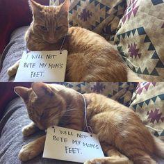 Lessons. Not being learned...  THEO! #theo #theothecat #theodorehobbes #cat #catsofinstagram #catlover #catoftheday #kitten #kittensofinstagram #kittiesofinstagram #kittenlove #kitty #tabby #tabbycat #tabbycatsofinstagram #tabbiesofinstagram #tabbycatworlddomination #tabbylove #orangetabby #garfield #catsagram #astoria #catlove #felinesofinstagram #kittygram #kittenoftheday #kittenstagram #orangetabbycat #TheDailyKitten by theodorehobbescat