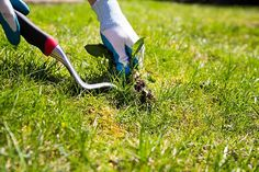 How do you take care of your Bermuda grass in the fall months? Broadleaf weed control is equally important to maintaining healthy grass in the fall. How To Deter Mice, Rid Of Ants, Bermuda Grass, Cleaning Car Upholstery, Dallas, Fall Months, Yard Care, Weed Control, Mice Control