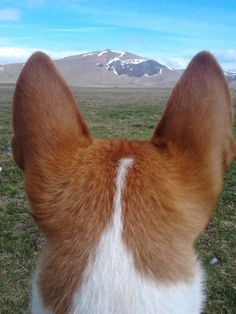 the world seen through a Basenji's eyes