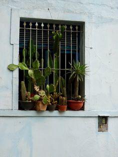 Seen in Santa Teresa, Rio Places To Visit, Santa, Nature, Rio De Janeiro, Naturaleza, Nature Illustration, Outdoors, Places Worth Visiting, Natural