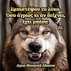 Native American Wisdom, Wolf Quotes, Husky, Gardening, Horses, Memes, Dogs, Animals, Quotes