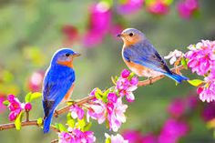 tavasz - Google-keresés Definition Of Spring, Bird App, Spring Aesthetic, Plant Growth, Summer Solstice, Editing Pictures, Cute Love, Beautiful Birds, Colors