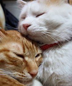 Toro and Shironeko, best friends forever. FromShironekoon FaceBook