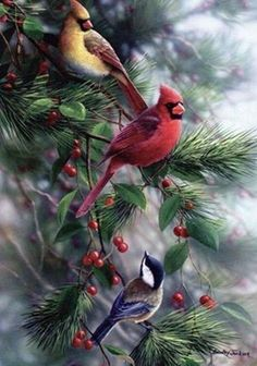 A pair of Cardinals & a little Chickadee
