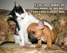 View All - Funny Animal Pictures With Captions - Very Funny Cats - Cute Kitty Cat - Wild Animals - Dogs (fun,funny,humor,jokes)