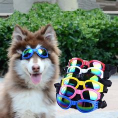 Dog Goggles from MissTaken's Boutique Dog Goggles, Frame Sizes, Pet Accessories, Your Pet, Collars, Plastic, Boutique, Glasses, Pets