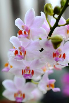 Orchid on Flickr.