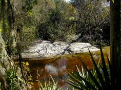 Little Manatee River State Park   A great place to canoe.  I found fossilized shark teeth on the sandy bottom shallows of the river.