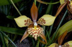 La Orquídea y sus asombrosas formas