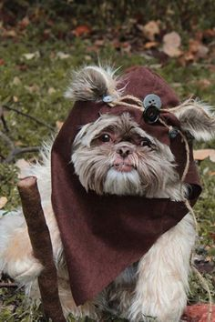 38 Ways to Dress Up Your Dog This Halloween via @PureWow