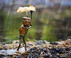 Dneska, když jsem venčil nejmladší dceru v lese, nám docela pršelo. Já měl naštěstí dobrou bundu, Terezka měla pláštěnku a dubánek si udělal přírodní deštník z dubového lístku.  ~ gesehen bei: Dubánci - https://www.facebook.com/dubanci/