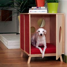 modern dog or cat house