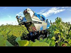 New Holland Braud, Agriculture, agricultura, vinho, vindima.