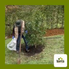en #TerraPradosyJardines nos encargamos del mantenimiento de tu jardín. #TerraPradosyJardines #Landscaping #MantenimientodeJardines #Paisajismo #CortedeCésped #Cercovivo #Paisaje #Jardín Instagram, Blog, Landscaping, Life, Scenery, Hands, Blogging