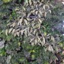 Jak využít rostlinu Rýmovník? – Príma receptář.cz Fat Cutter Drink, How To Dry Basil, Herbs, Plants, Hydroponics, Herb, Plant, Planets, Medicinal Plants