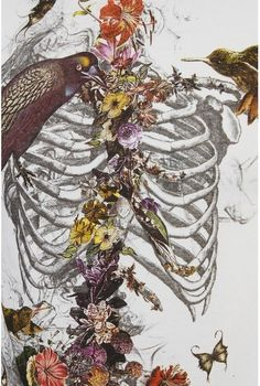 Skull-less Skeleton. An interesting drawing celebrating life, death, and beauty. Anyone know the author? Art And Illustration, Street Art, Art Beat, Skeleton Art, Skeleton Bones, Skeleton Flower, Photocollage, A Level Art, Anatomy Art