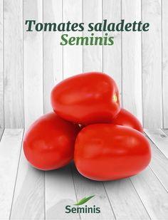 Explora la calidad de los tomates saladette Seminis