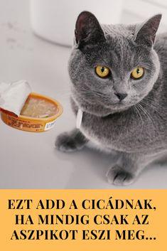 Cosma Soup – ha a macskád csak az aszpik levét eszi meg. Ads
