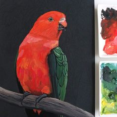 Gouache King Parrot by Deanna Maree Watercolor Logo, Watercolor Design, Watercolor Flowers, Watercolor Paintings, Tropical Birds, Colorful Birds, Christmas Poster, Christmas Art, Watercolor Pictures