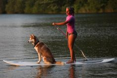 Stand-Up Paddling with your Pooch #SUP #dog #ocean Now that I fell in love with this in Florida, it's time to add my border collie to the mix.