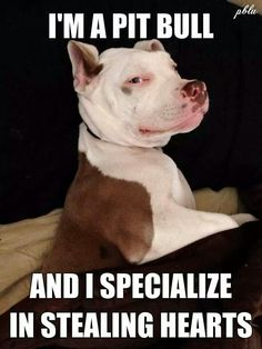 The most loyal and loving dog I have ever had is my pit