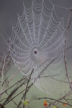 What a beauty - saved to Webs and Weavings