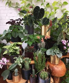 #plantgang @jamies_jungle Colorful Plants, Green Plants, House Plants Decor, Plant Decor, Botanical Interior, Inside Plants, Plants Are Friends, Ideias Diy, Nature Plants