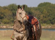 American Quarter Horse, Horse Tack, Camel, Horses, Animals, Animales, Animaux, Horse, Animal