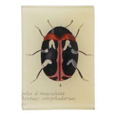 John Derian Company Inc — Carpet Beetle 50